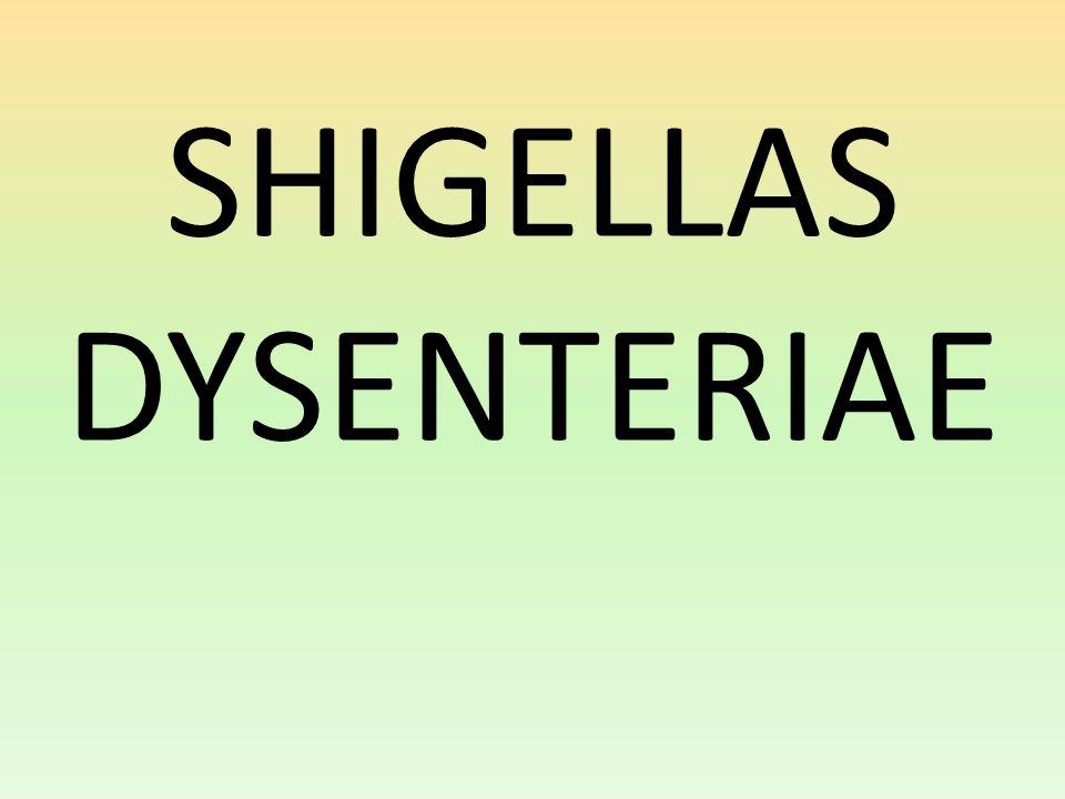 SHIGELLAS DYSENTERIAE