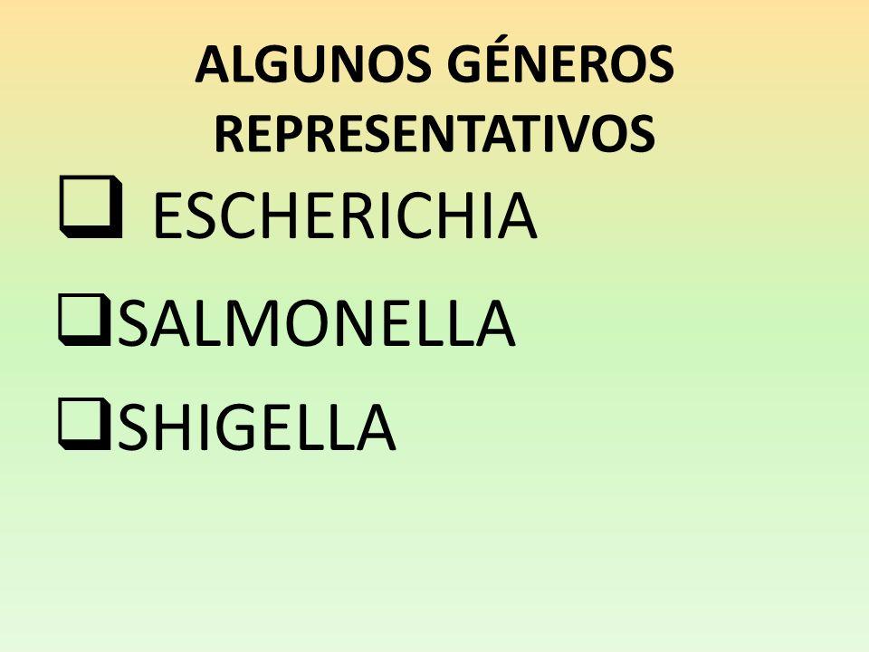 ALGUNOS GÉNEROS REPRESENTATIVOS