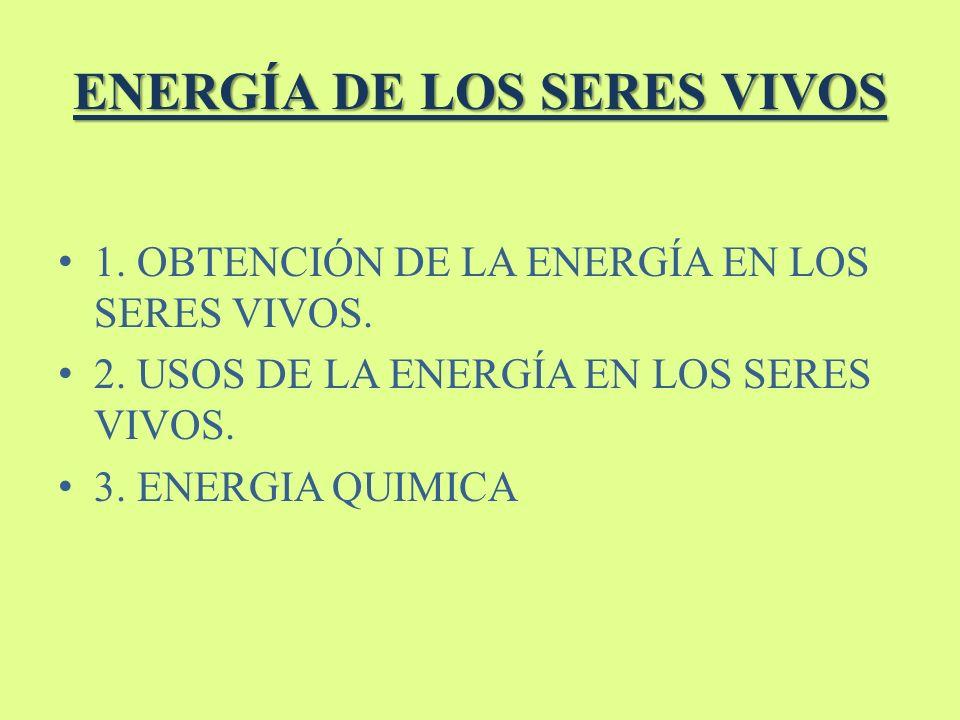 ENERGÍA DE LOS SERES VIVOS