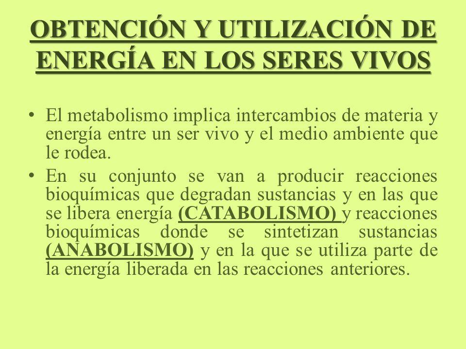 OBTENCIÓN Y UTILIZACIÓN DE ENERGÍA EN LOS SERES VIVOS