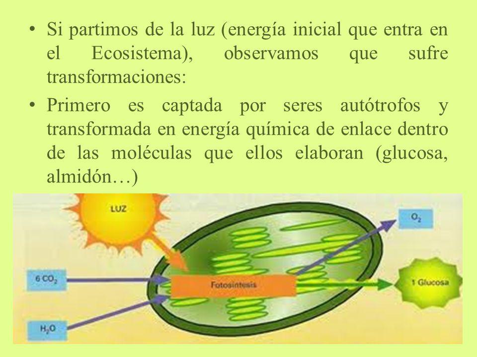 Si partimos de la luz (energía inicial que entra en el Ecosistema), observamos que sufre transformaciones: