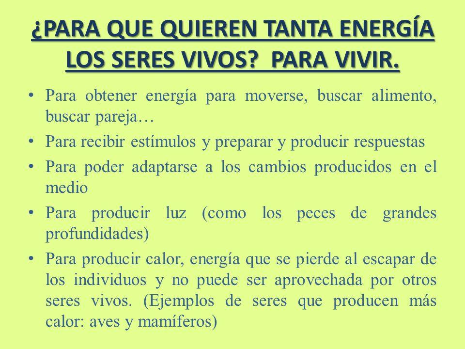 ¿PARA QUE QUIEREN TANTA ENERGÍA LOS SERES VIVOS PARA VIVIR.