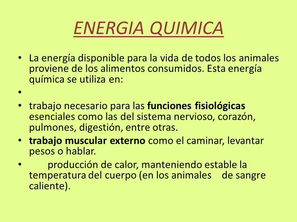 ENERGIA QUIMICA La energía disponible para la vida de todos los animales proviene de los alimentos consumidos. Esta energía química se utiliza en: