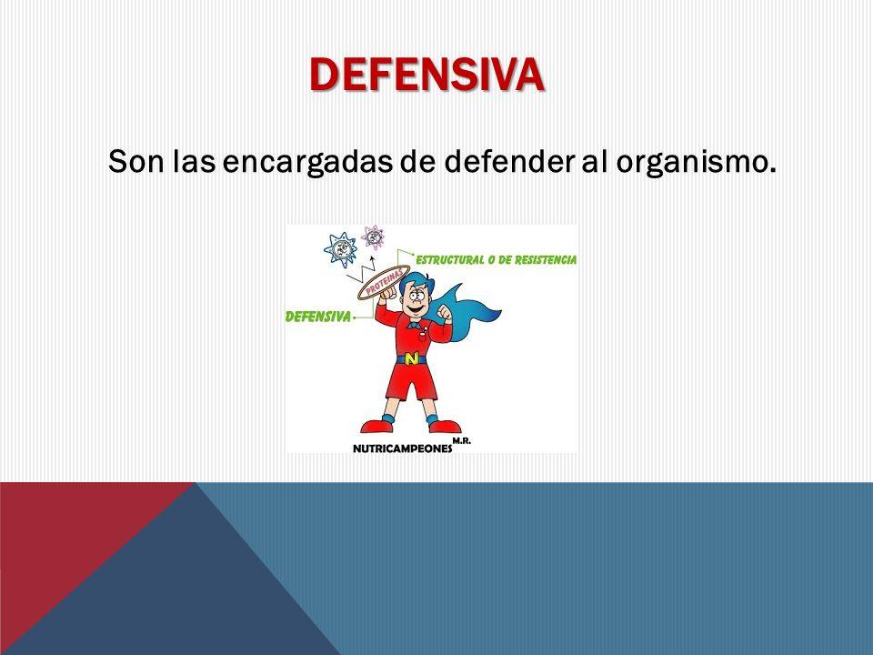 DEFENSIVA Son las encargadas de defender al organismo.