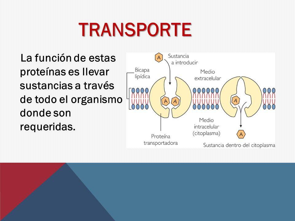 TRANSPORTE La función de estas proteínas es llevar sustancias a través de todo el organismo donde son requeridas.