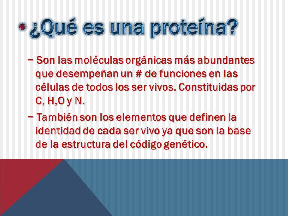 •¿Qué es una proteína