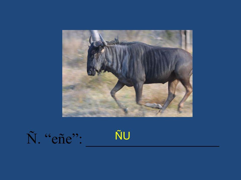 Ñ. eñe : __________________