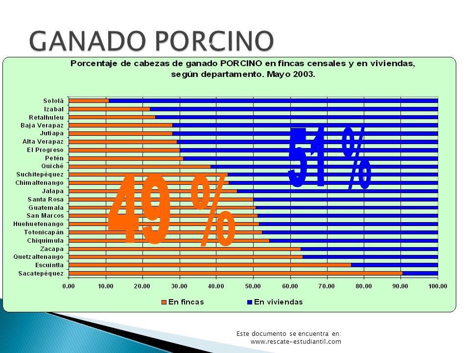 51 % 49 % GANADO PORCINO Grafica 12