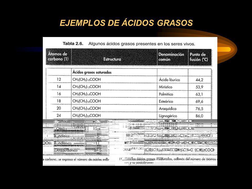 EJEMPLOS DE ÁCIDOS GRASOS