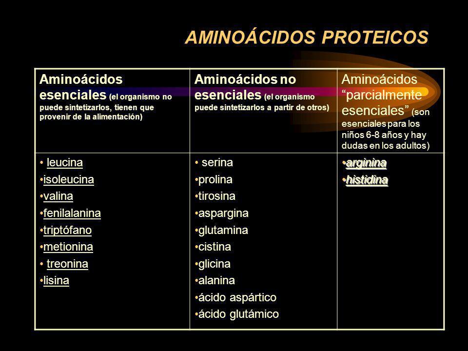 AMINOÁCIDOS PROTEICOS