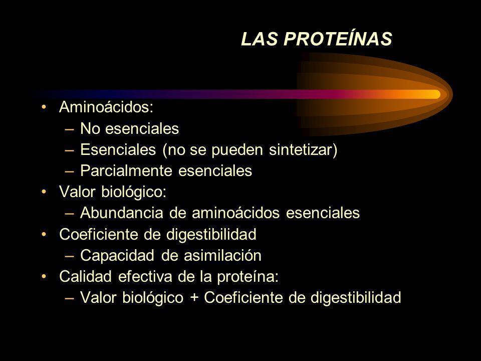 LAS PROTEÍNAS Aminoácidos: No esenciales