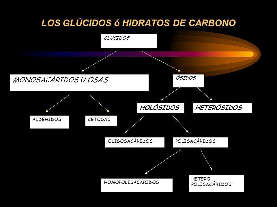 LOS GLÚCIDOS ó HIDRATOS DE CARBONO