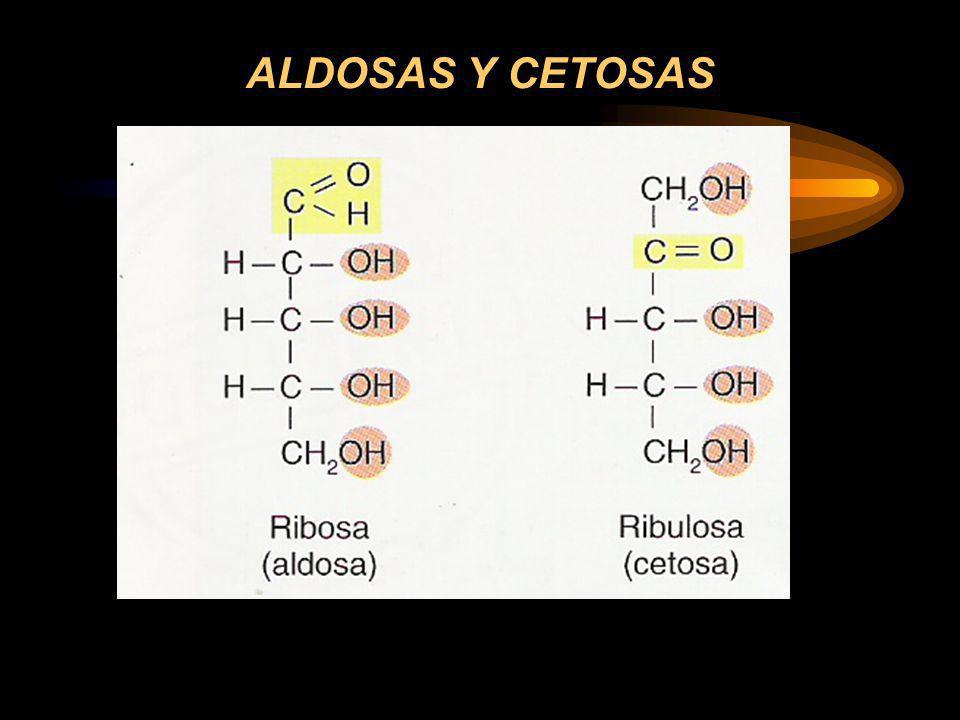 ALDOSAS Y CETOSAS