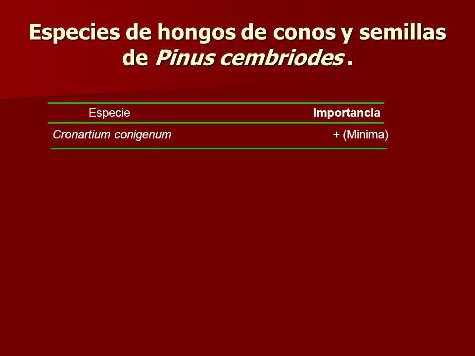 Especies de hongos de conos y semillas de Pinus cembriodes .