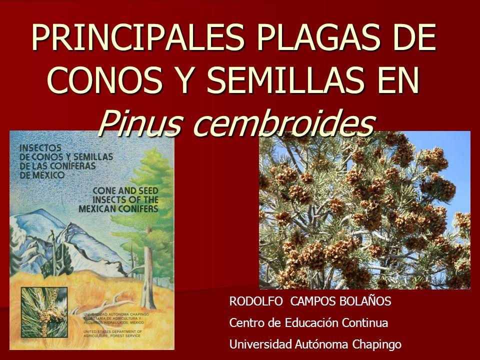 PRINCIPALES PLAGAS DE CONOS Y SEMILLAS EN Pinus cembroides