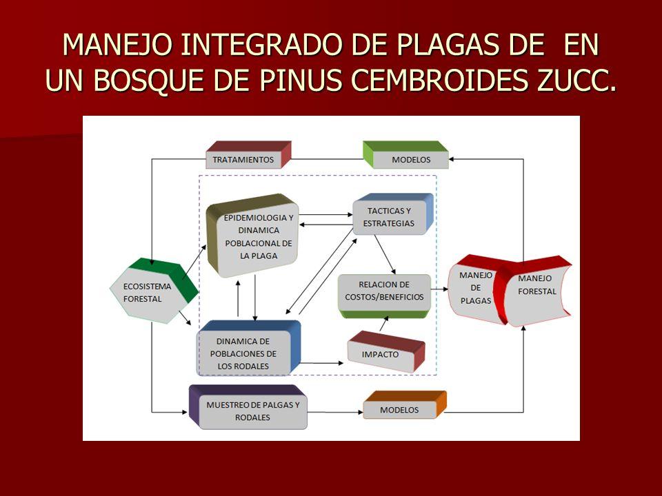 MANEJO INTEGRADO DE PLAGAS DE EN UN BOSQUE DE PINUS CEMBROIDES ZUCC.
