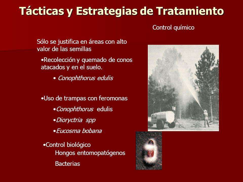 Tácticas y Estrategias de Tratamiento