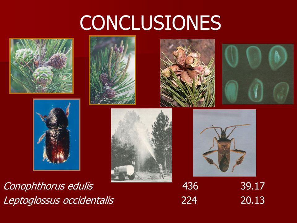 CONCLUSIONES Conophthorus edulis 436 39.17