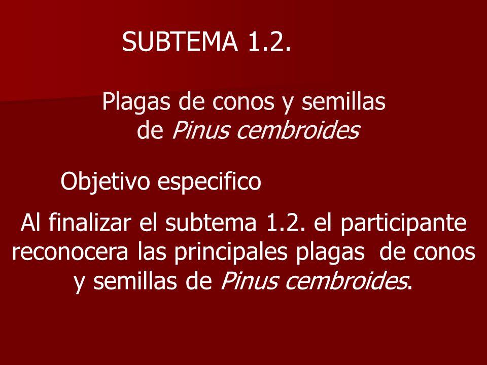 SUBTEMA 1.2. Plagas de conos y semillas de Pinus cembroides