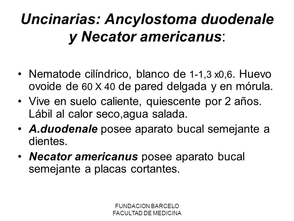Uncinarias: Ancylostoma duodenale y Necator americanus: