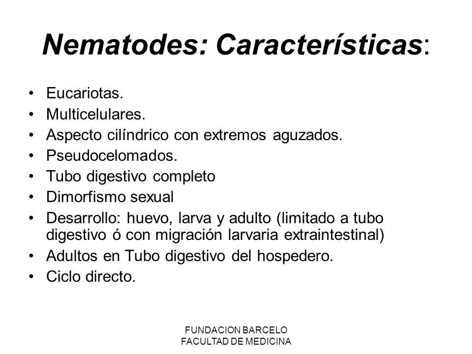 Nematodes: Características: