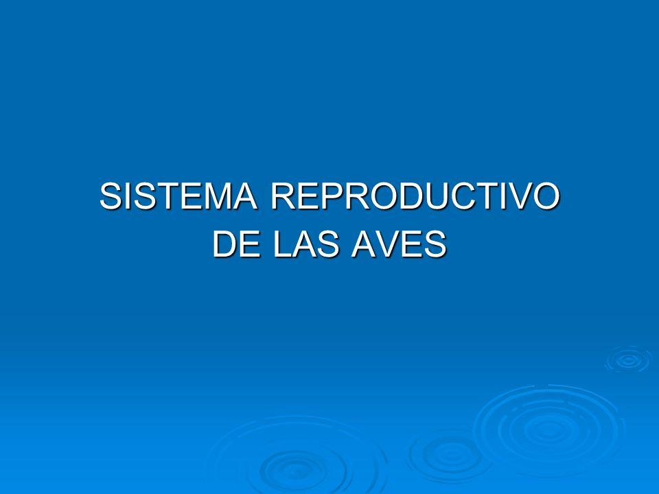 SISTEMA REPRODUCTIVO DE LAS AVES