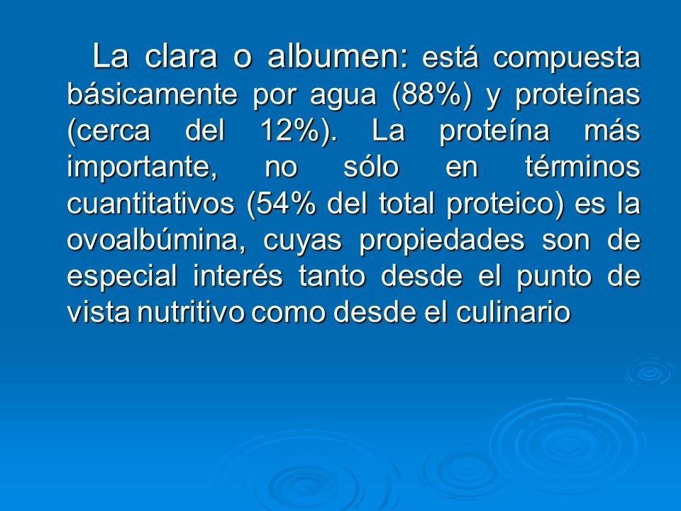 La clara o albumen: está compuesta básicamente por agua (88%) y proteínas (cerca del 12%).