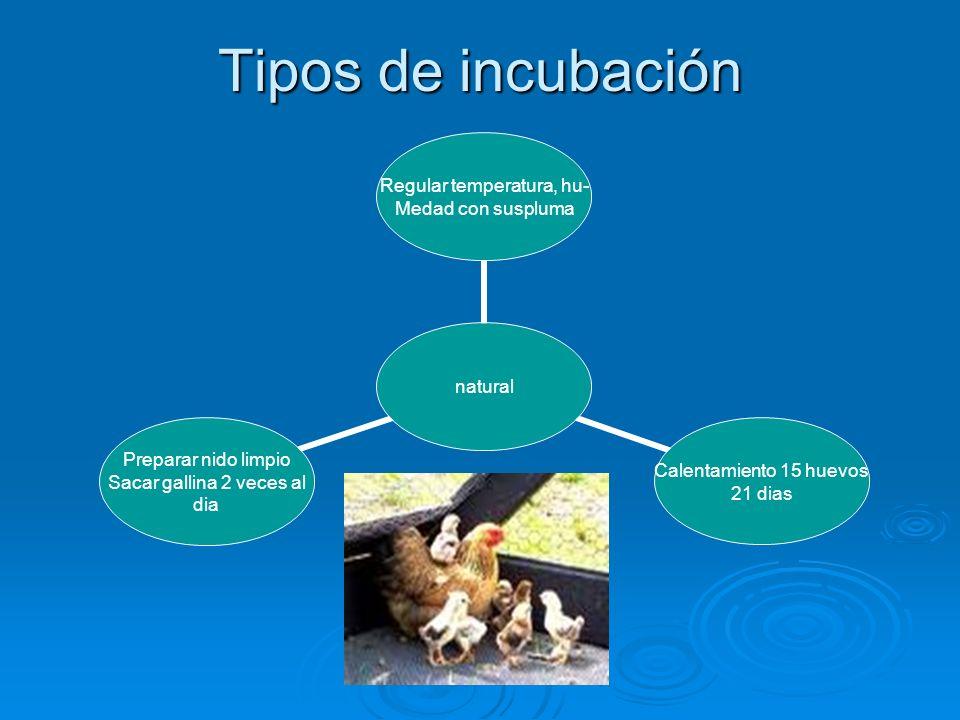 Tipos de incubación
