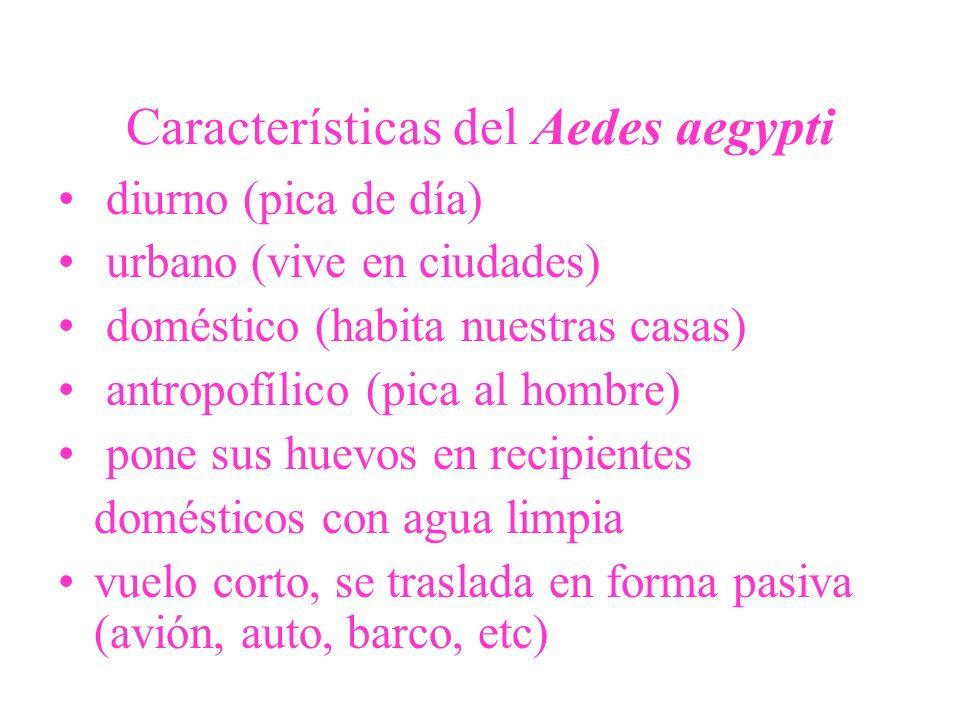 Características del Aedes aegypti