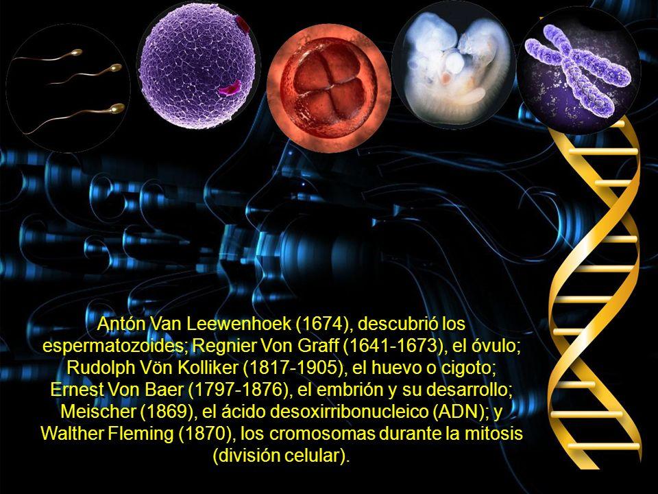 Antón Van Leewenhoek (1674), descubrió los espermatozoides; Regnier Von Graff (1641-1673), el óvulo; Rudolph Vön Kolliker (1817-1905), el huevo o cigoto; Ernest Von Baer (1797-1876), el embrión y su desarrollo; Meischer (1869), el ácido desoxirribonucleico (ADN); y Walther Fleming (1870), los cromosomas durante la mitosis (división celular).