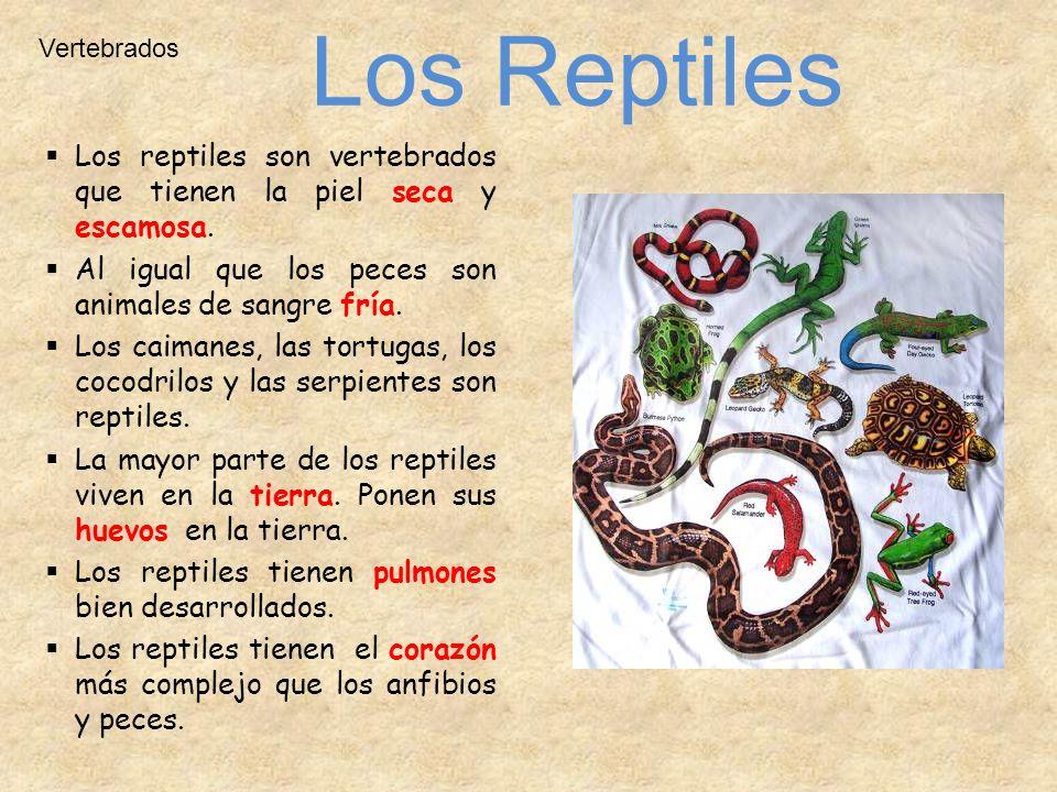 Q Son Los Reptiles Animales Vertebrados. ...