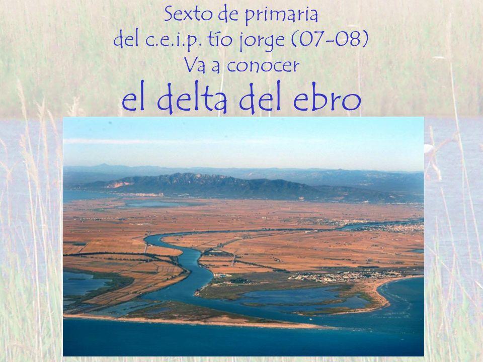 el delta del ebro Sexto de primaria del c.e.i.p. tío jorge (07-08)