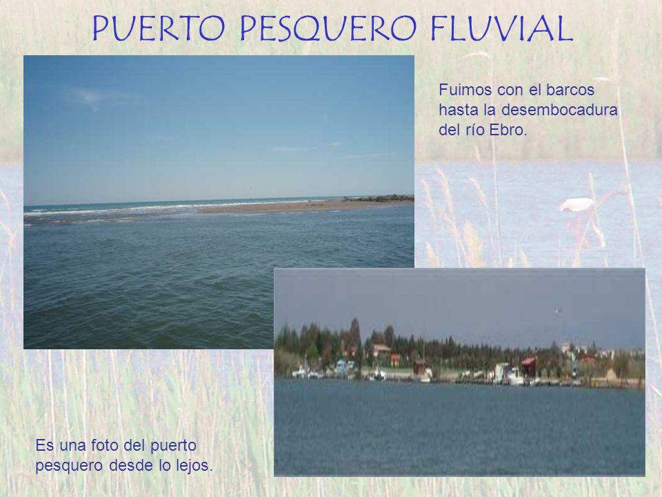 PUERTO PESQUERO FLUVIAL