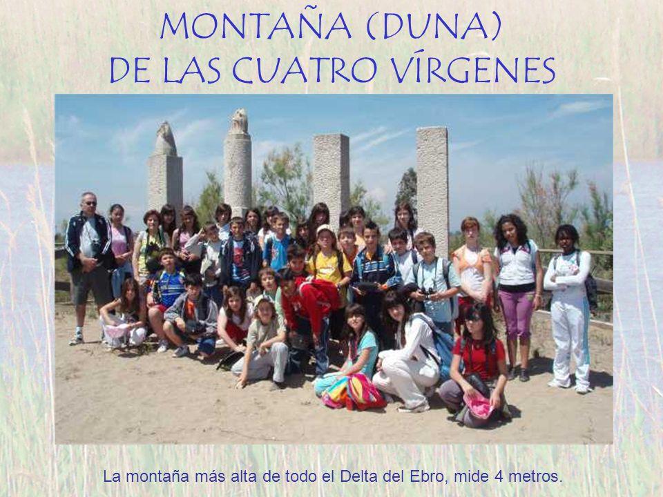 MONTAÑA (DUNA) DE LAS CUATRO VÍRGENES