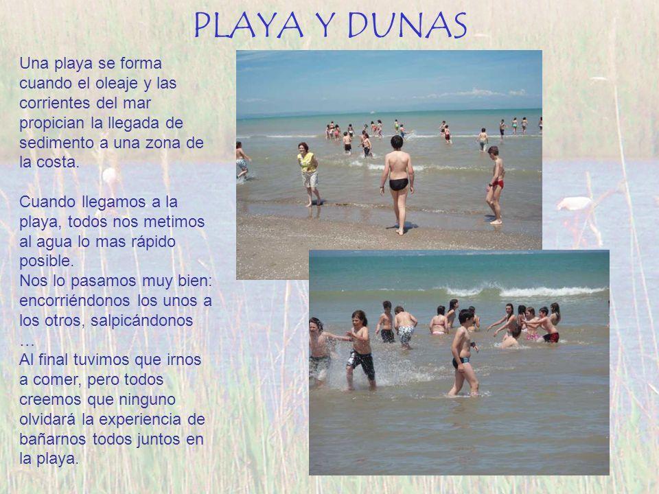 PLAYA Y DUNAS Una playa se forma cuando el oleaje y las corrientes del mar propician la llegada de sedimento a una zona de la costa.