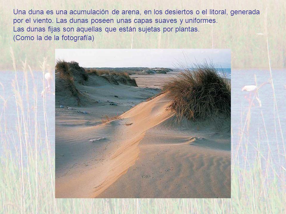 Una duna es una acumulación de arena, en los desiertos o el litoral, generada por el viento. Las dunas poseen unas capas suaves y uniformes.