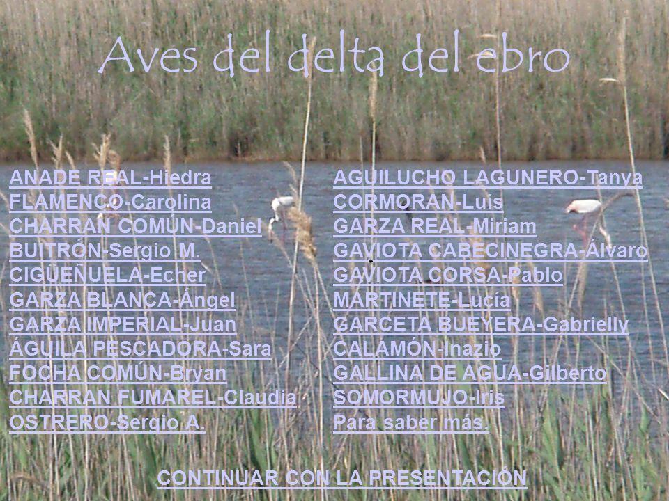 Aves del delta del ebro ANADE REAL-Hiedra FLAMENCO-Carolina