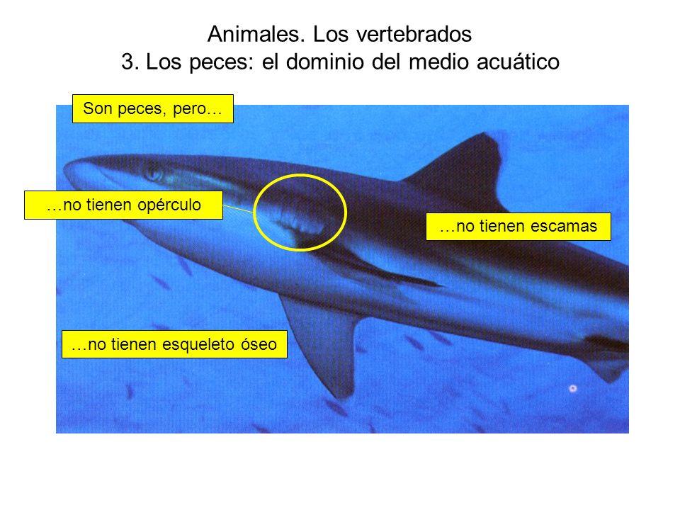 Animales. Los vertebrados 3. Los peces: el dominio del medio acuático