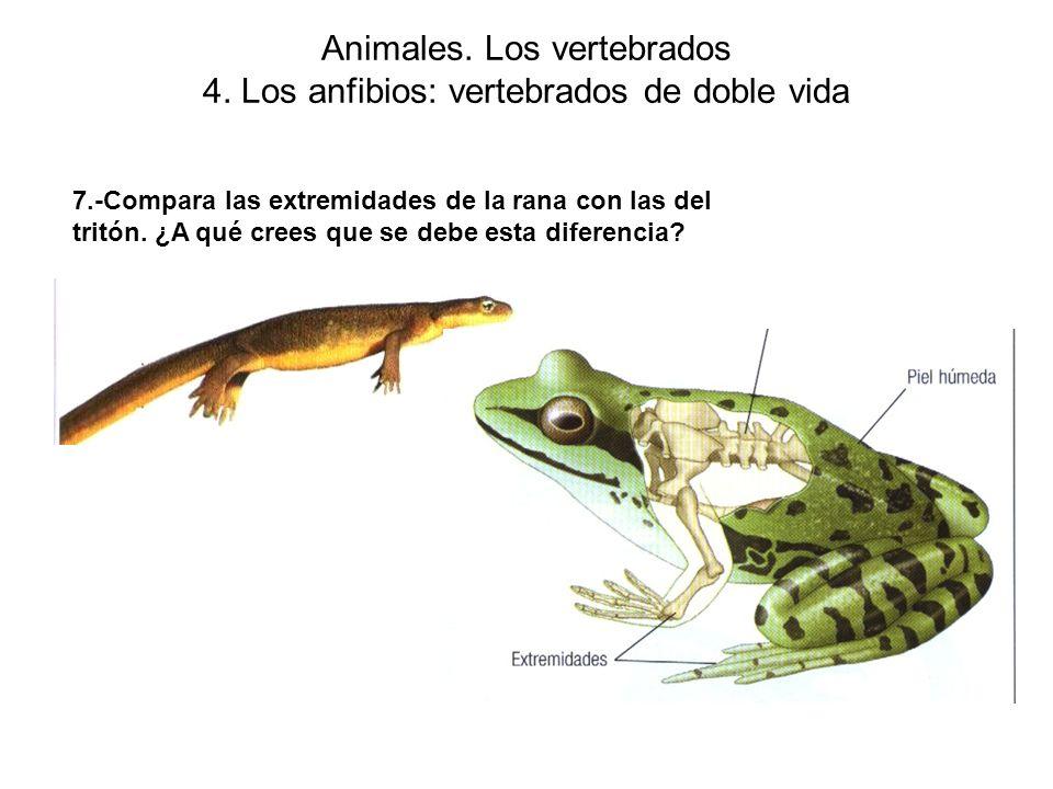 Animales. Los vertebrados 4. Los anfibios: vertebrados de doble vida