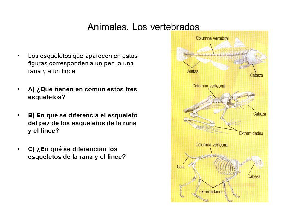 Animales. Los vertebrados
