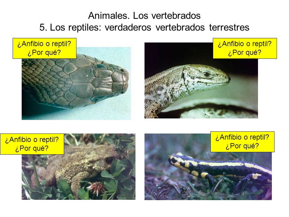 Animales. Los vertebrados 5