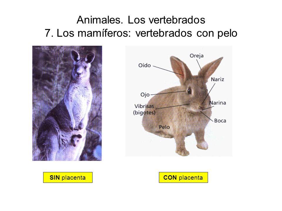 Animales. Los vertebrados 7. Los mamíferos: vertebrados con pelo