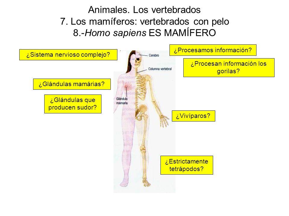 Animales. Los vertebrados 7. Los mamíferos: vertebrados con pelo 8