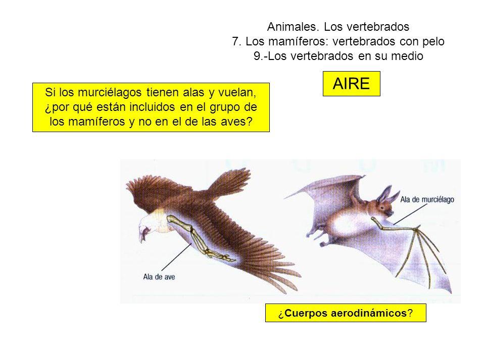 ¿Cuerpos aerodinámicos