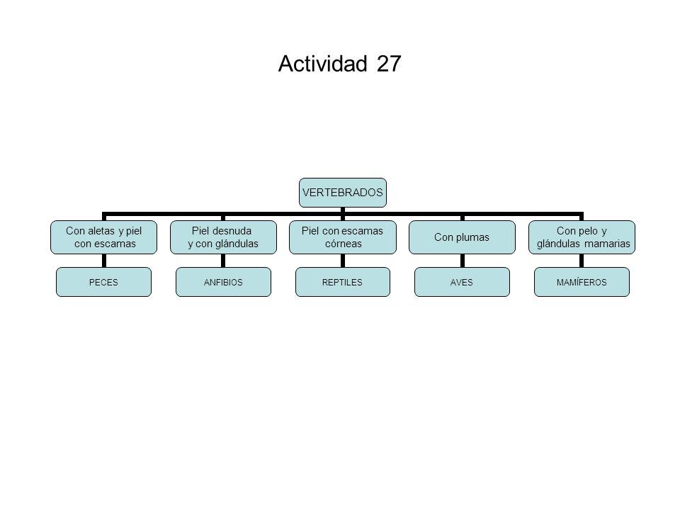 Actividad 27
