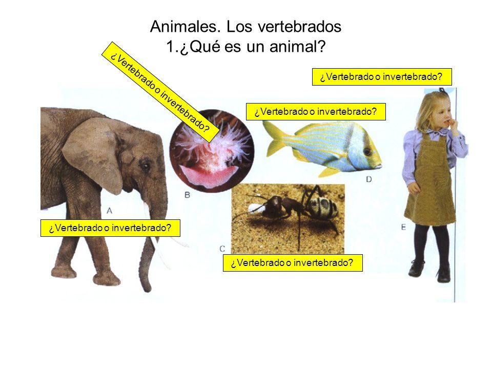 Animales. Los vertebrados 1.¿Qué es un animal