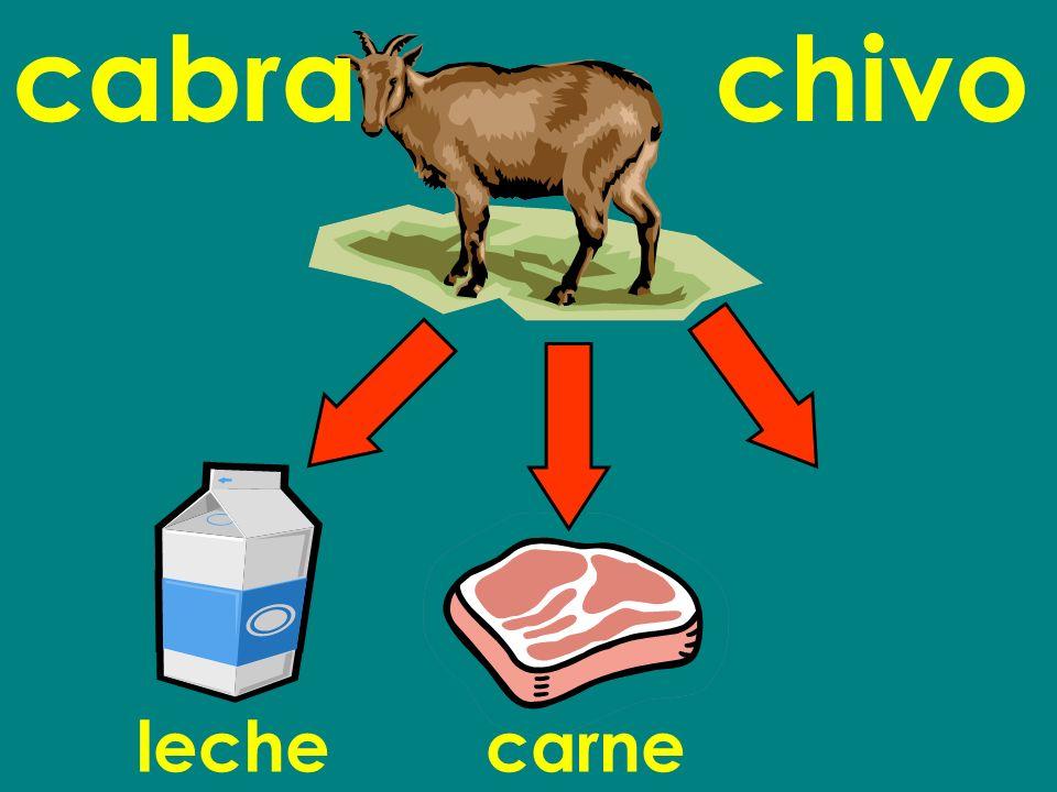 cabra chivo leche carne