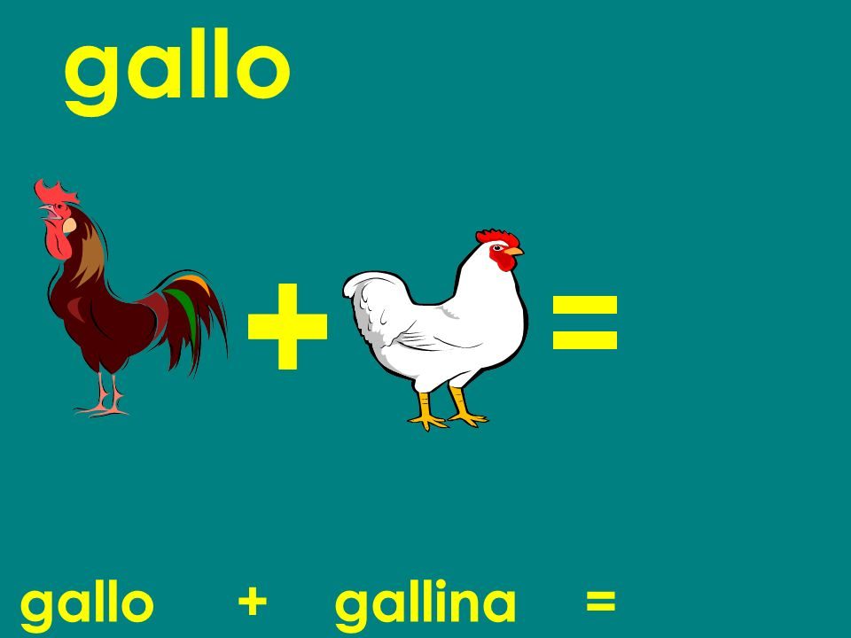 gallo gallo + gallina = chick