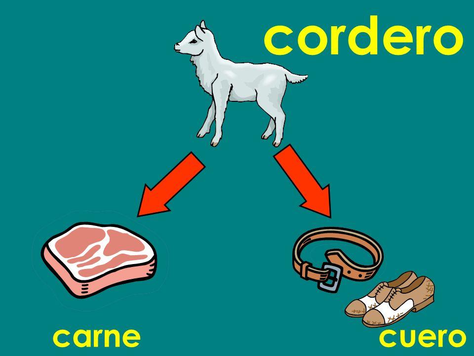 cordero carne cuero