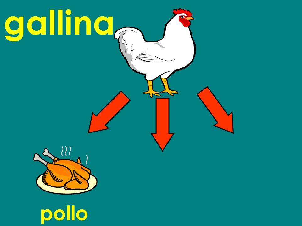 gallina pollo